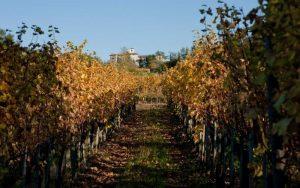 vineyards in manzano italy
