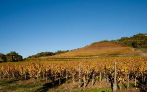 vineyards of rosazzo italy
