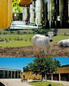 tenuta del melo vineyard estate